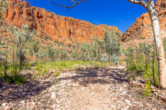 Bush walking in outback Australia. Royalty Free Stock Photos