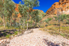 Bush walking in outback Australia. Stock Images