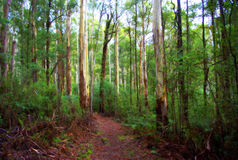 Bush walking track in country victoria australia Stock Photo