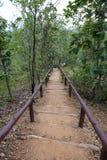 Bush walking. Track at Phachor chiangmai thailand Royalty Free Stock Photo
