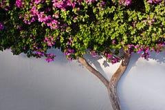 bush on the wall Stock Image