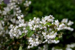 Bush of beautiful white flowers stock images