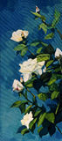 Bush of white roses in the night dark blue sky Stock Images