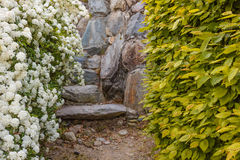 A bush of white  spirea flowers. A bush of white flowers spirea leads to a stone staircase Stock Images