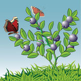 Bush of whortleberry with a butterfly. Royalty Free Stock Photography