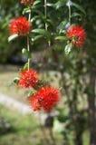 Bush willow Royalty Free Stock Image