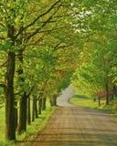 bush wiosna cukier Zdjęcie Royalty Free