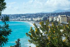 A bush of yellow acacia blooms against the backdrop of the azure sea and the French city of Nice. stock images