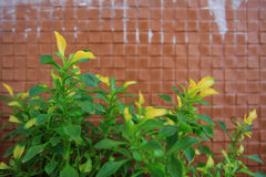 Bush with yellow and green leave on tile wall background Stock Photography