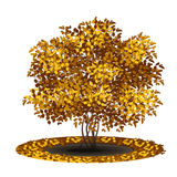 Bush with yellow leaves and shadow Royalty Free Stock Photo