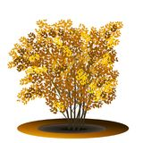 Bush with yellow leaves and shadow. On white background Royalty Free Stock Photos