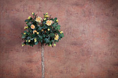 Bush of yellow roses. On a background of vintage wall Stock Images