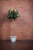 Bush of yellow roses in a vase. On a background vintage wall Stock Photography