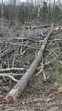 Bush-Zerstörung in Quebec Kanada, Nordamerika Stockfotografie