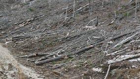 Bush-Zerstörung in Quebec Kanada, Nordamerika Stockbild