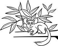 Bushbaby на ветви бесплатная иллюстрация
