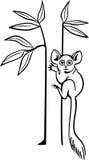 Bushbaby бесплатная иллюстрация