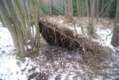 Emergency shelter in the woods. Bushcraft, emergency shelter to protect you from the storm stock photography