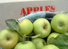 Bushel of apples. Bushel of green apples in an apple cart stock photo