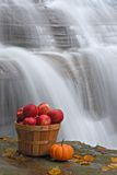Bushel of Apples Royalty Free Stock Images