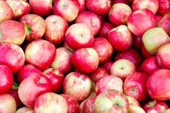 Bushel of apples in fall. A bushel of apples at a farm in the Fall royalty free stock images