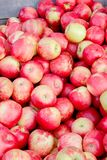 Bushel of apples in fall. A bushel of apples at a farm in the Fall royalty free stock photos