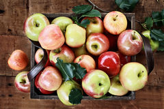 A Bushel of Apples. Freshly picked bushel of apples in an old vintage wooden crate with leather handles on a rustic wood table. Image shot from above stock photos