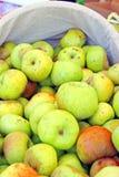 Bushel av gröna äpplen royaltyfri bild