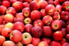 Bushel av röda äpplen royaltyfria bilder