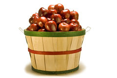 Bushel Basket of Apples Spilling Out. A red, green, and tan bushel basket of apples spilling out on a white background stock photography
