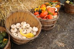 Bushel baskets of gourds and squash. Baskets of gourds surround bales of hay at a New England family farm roadside stand Stock Photo