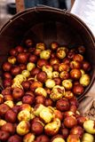 Bushel of brown ziziphus jujube dates Royalty Free Stock Images