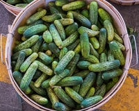 Bushel of Cucumbers at a farmers market Stock Images