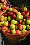 Bushel of fresh ripe apples Royalty Free Stock Photography