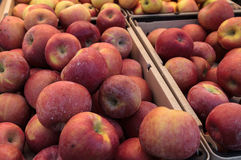 Bushel of green and red apples Royalty Free Stock Photography