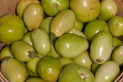 Bushel of Green Tomatoes. Bushel basket filled with freshly hand picked green tomatoes at a local farm stock photography