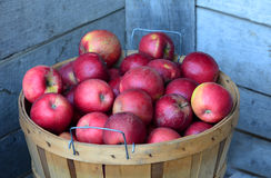 Bushel of Michigan  apples Stock Image
