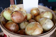 Bushel of Onions. A bushel of onions at the farmer`s market stock photo