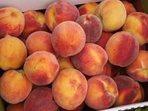 Bushel of Peaches Close-up. Close-up of a bushel of picked peaches stock photos
