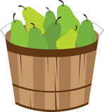 Bushel Of Pears Stock Photo