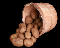 Bushel of potatoes Royalty Free Stock Image