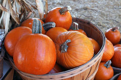 Bushel of pumpkins at Pumpkin patch Royalty Free Stock Photography