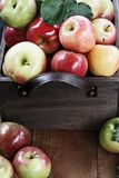 Bushel of Red Apples in a Crate. Freshly picked bushel of apples in an old vintage wooden crate with leather handles on a rustic wood table stock photo