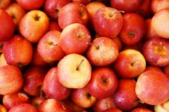 Bushel of Red Apples. A bushel of fresh just picked red apples stock image