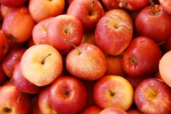 Bushel of Red Apples. A bushel of fresh just picked red apples stock photo