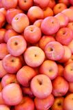 Bushel of Red Apples. A bushel of fresh just picked red apples royalty free stock photos