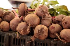 Bushel of red beets grown locally Royalty Free Stock Photography