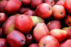 Bushel of Red Pears. A bushel of fresh just picked red pears stock photography