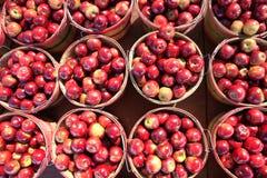 busheled äpplen Royaltyfri Fotografi