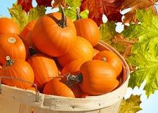 Bushelkorg av pumpakortkort med abstrakt Autumn Leaves bakgrund Arkivbild